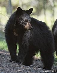 Mama Cubs 050817 39741