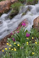 Streamside wildflowers 080619 7868 3