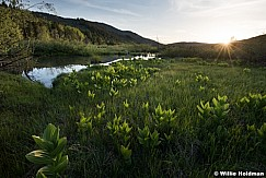 Skunk Cabbage Sunset 060217 2