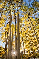 Heavenly Golden Aspens 091818 3