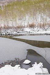 Lake Creek Spring Snow 051717 8971