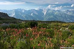 Wildflowers-Wasatch-071915-3-1