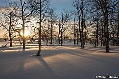 Aspens At Sunrise Winter 012817 2099