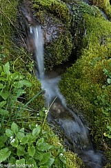 Water flowing from spring