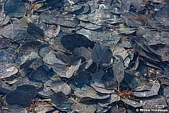 Aspen Leaves Iced 101517 2564 5