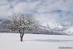 Lone Tree Timpanogos 011317 0790