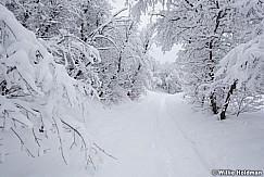 Snow Path 010517 9117 5