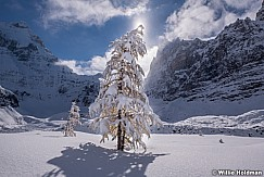 Snow Coverd Larch 100318 7468