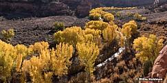 Cottonwood Train Escalante