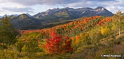 Timpanogos Autumn Color 093019 4184