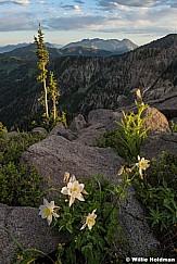 Pioneer Peak Columbine F070516 4997 4