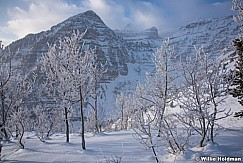 Timpanogos Frosty Trees 122915 7557