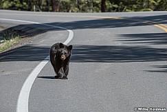 Black Bear Cub 050817 3997