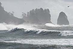 La Push Waves 102916 8661