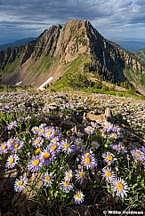 Freedom Peak FleabaneF 072016 2