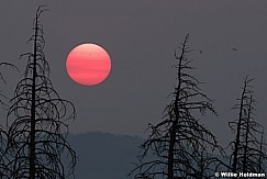 Red Sun Pine 090617 7384