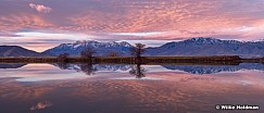Timpanogos Purple Reflection 1122170947