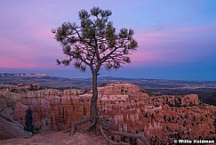 Bryce Canyon Glow 040616 4731