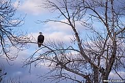 Eagle Perch 031318 5433
