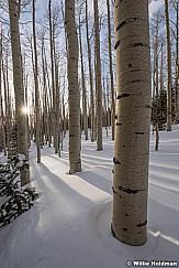 Aspen Forest Winter 030717 9790