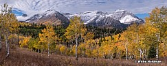 Golden Aspens Timp Clouds 100518 9822