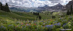 Death Shelve Tetons Wildflowers 080919 9632