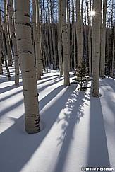 Pine tree sunburst 030917 0017