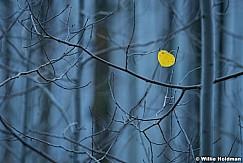 Autumn Colors Timpanogos 101317 1673