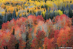 Red yellow aspens 092916 8049 1