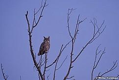 Honed Owl 102317 6523 6523