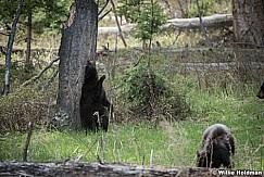 Bear Back Scratch 050817 4988