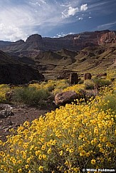 Grand Canyon Cactus Wildflowers 042019 4994