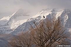 Bald Eagle Timp 020418 1632