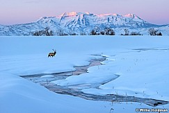 Timpanogos Sunrise Winter Elk