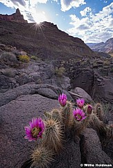 Grand Canyon Cactus Wildflowers 042019 5055