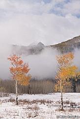 Lone Aspen Fog 101118 0516 4