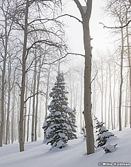 Misty Aspen Winter Trees 010117 6x7vert