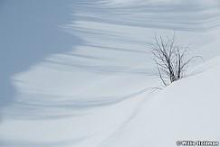 Clean Snow Bush 030618 4596