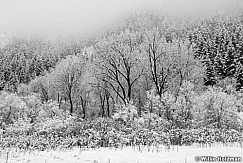 South Fork Snow Trees 011315 4289