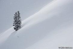 Lone Pine Winter Snow 011319 0632