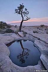 San Rafael Yucca 061819 4752 1 of 2
