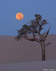 Lone Tree Full Moon 082618 7668 2 6x7F