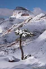 Solitary Tree Zion Winter 020619 5868 3