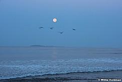 Mexico Ocean Moon 062016 5795
