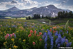 Grand Teton Wildflowers Sharp080919 9822 3