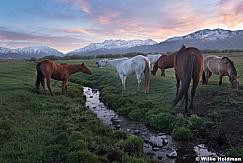 Heber Horses Spring 042819 7242