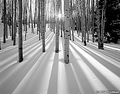 sunburstAspens198020000402Fb W