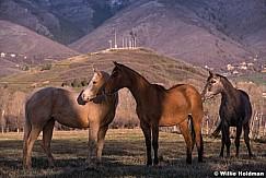 Three Horses 042214 5754