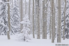 Aspen Grove Snow Storm 031319 9926
