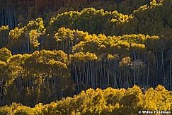 Boulder Mountain Aspens 100917 3